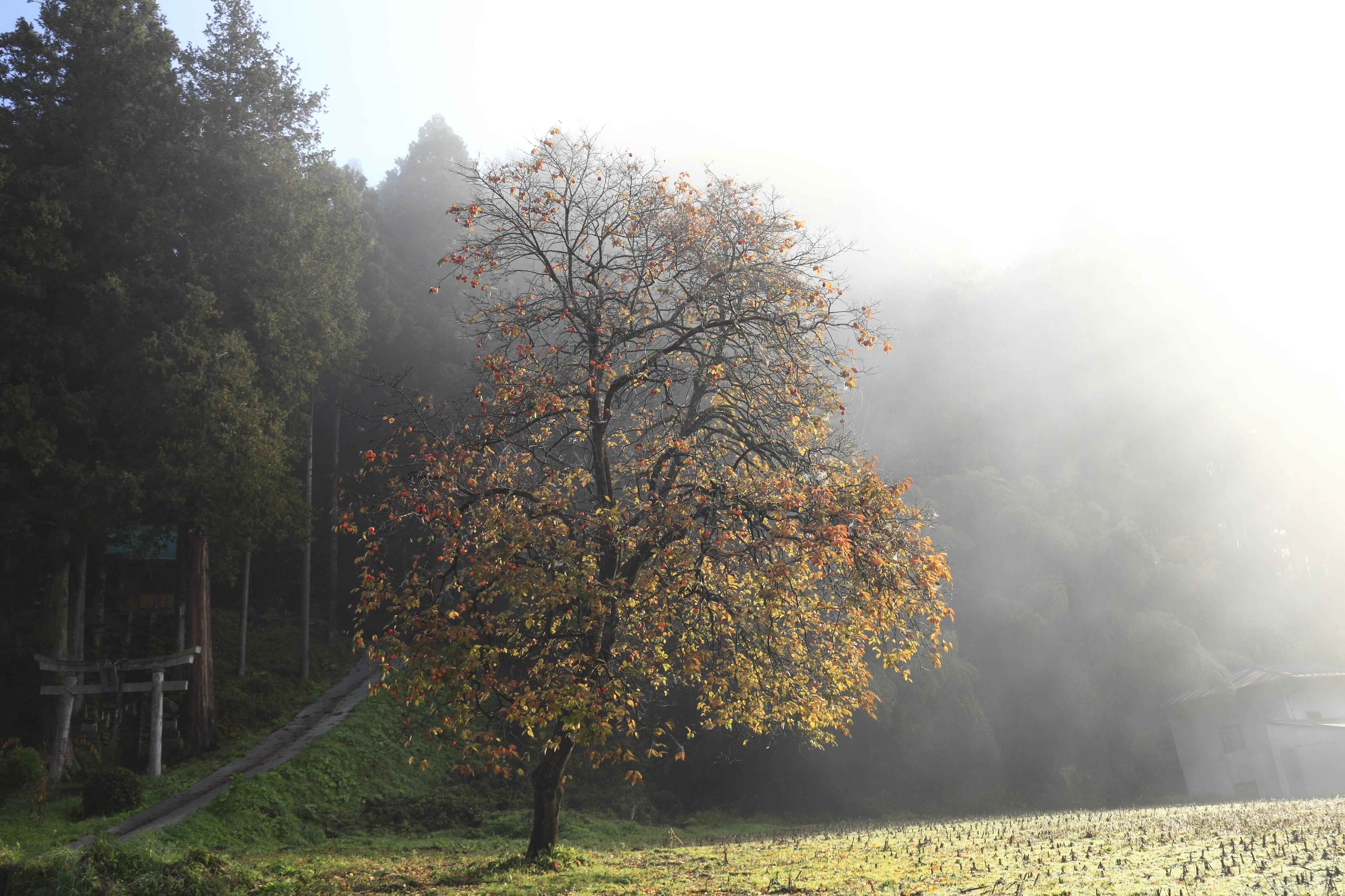 『秋への彩色』の画像