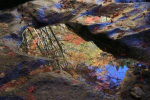 『『佳作(秋を映して)』の画像』の画像