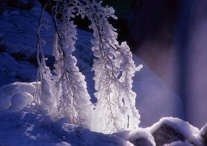 『『特選「氷の造形」』の画像』の画像