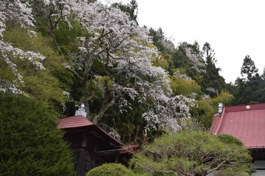 『長遠寺全景0426』の画像
