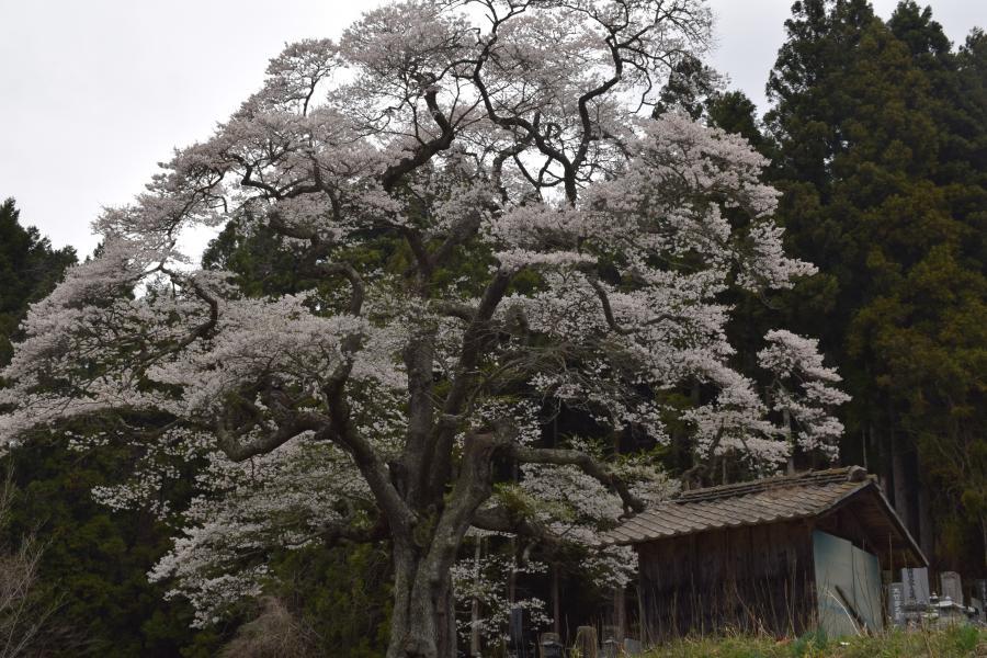 『二段田全景0426』の画像