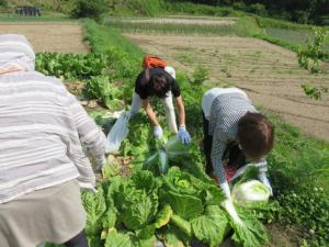 『農業体験2』の画像