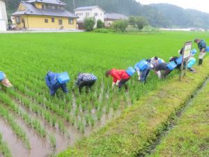 『農業体験3』の画像