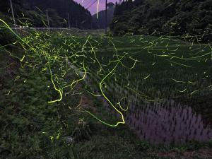 『潤夏蛍舞「特選」』の画像