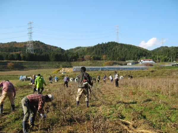 『大豆収穫』の画像