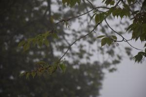 『江竜田アップ0425』の画像