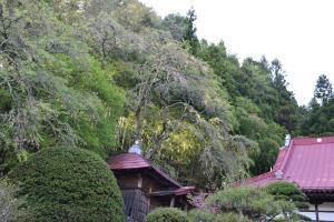 『長遠寺0425』の画像