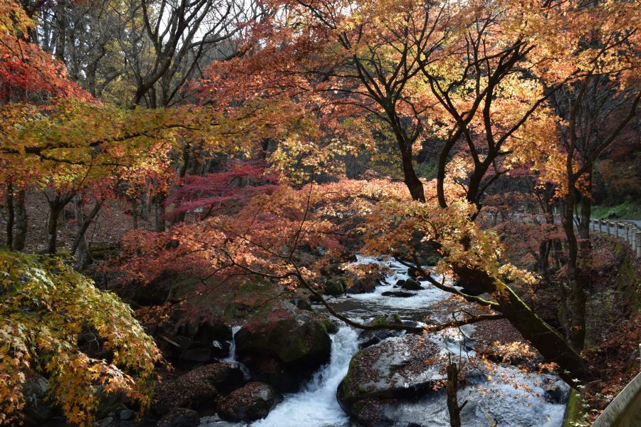 『強滝1116』の画像