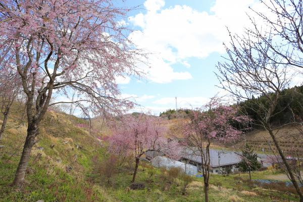 舘山公園の春
