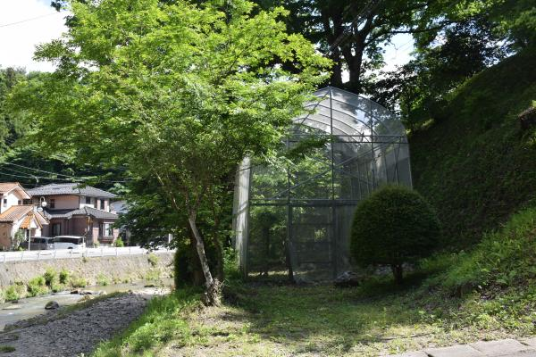オオムラサキ2020060802