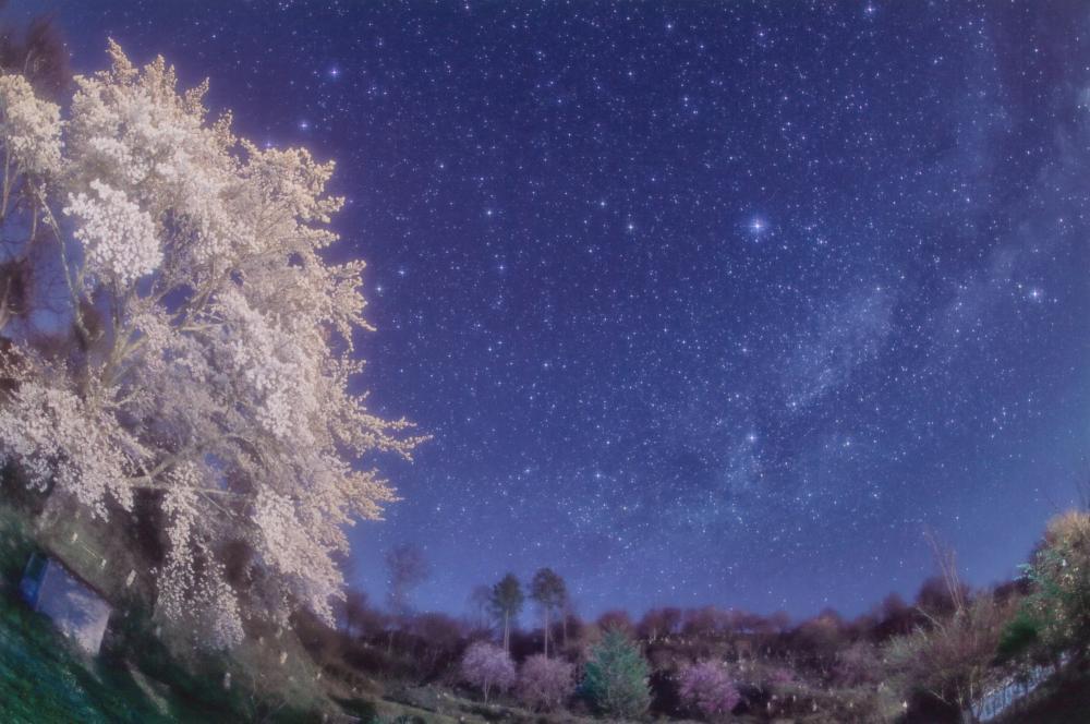 桜さく銀河2