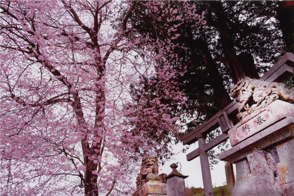 守護神の春2