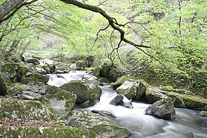 強滝(こわだき)