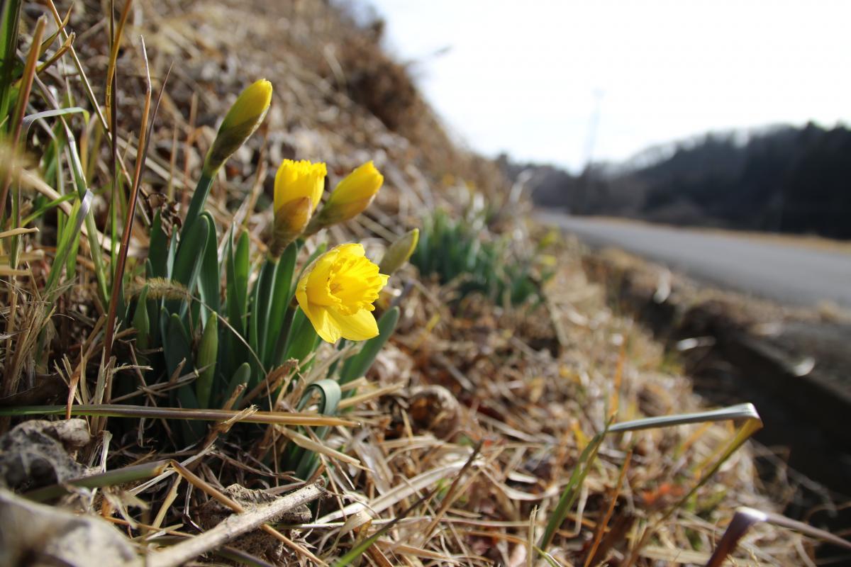 『春の訪れ』の写真
