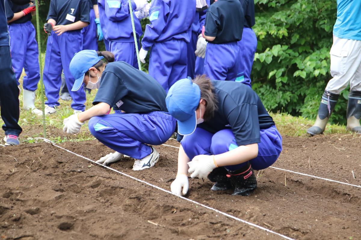 『大豆の栽培を始めました。』の写真